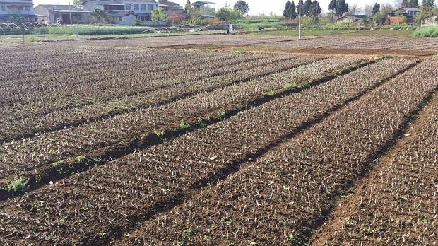 农业种植技术